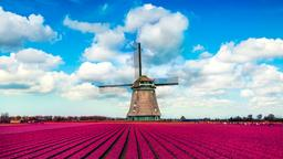 Find cheap flights from Tauranga to the Netherlands
