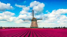 Find cheap flights from Auckland to Netherlands