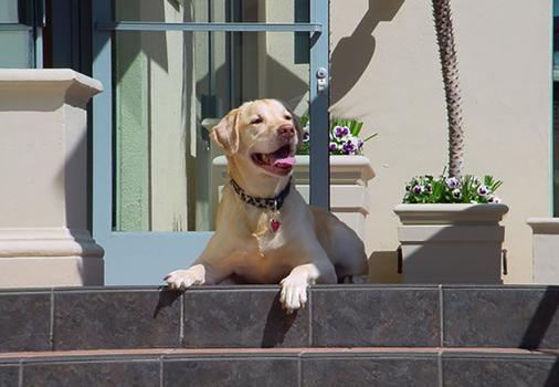 JW Marriott Santa Monica Le Merigot - Santa Monica - Pet friendly